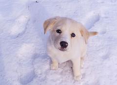 ペットも「冷え」に注意 冷えに起因する病気とは?