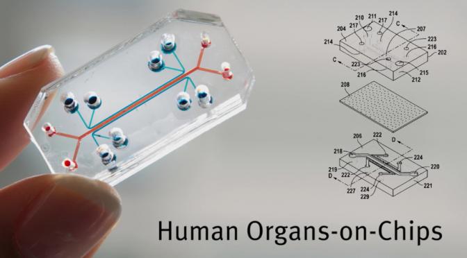 lung-on-a-chip|肺の仕組みを簡略化してマイクロチップに表現