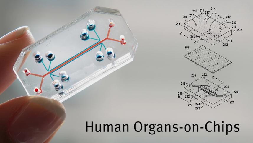 human_organs_on_chips