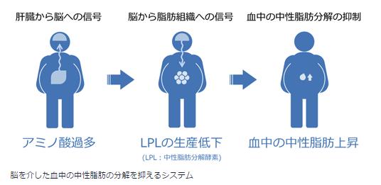 脳を介した血中の中性脂肪の分解を抑えるシステム