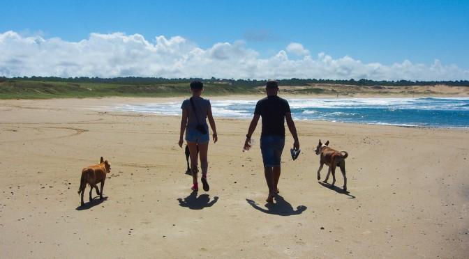砂浜ウォーキングでメタボ解消|白良浜海岸で和歌山県立医大教授らが調査