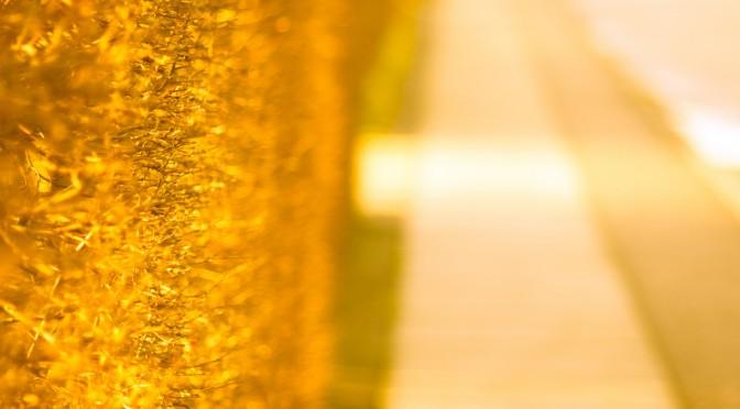 カリスマパーツモデル・金子エミ流ハチミツスクラブ&ハチミツ卵白パックの方法|#あさイチ(NHK)