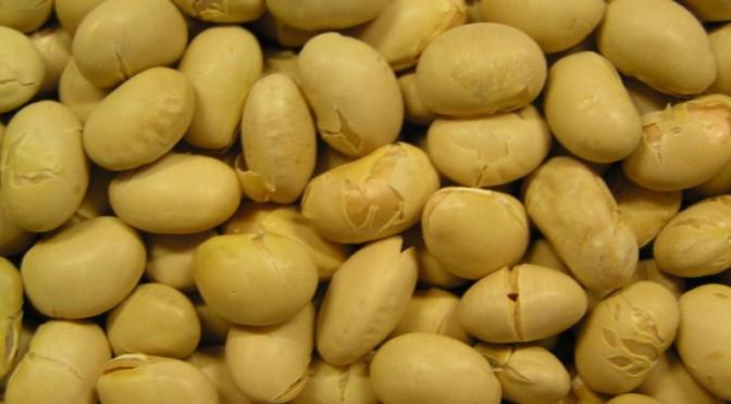 大豆:女性は食べ過ぎないで 乳がんリスク減も肝臓がん危険性高まる|厚労省研究班