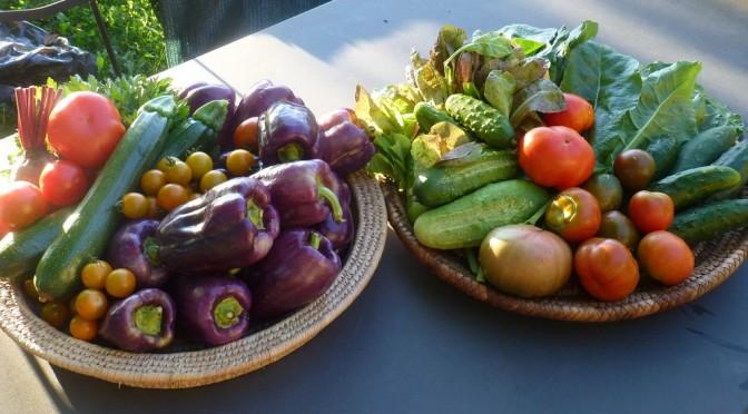 低収入ほど野菜の摂取量が不足している!|2011年の国民健康・栄養調査