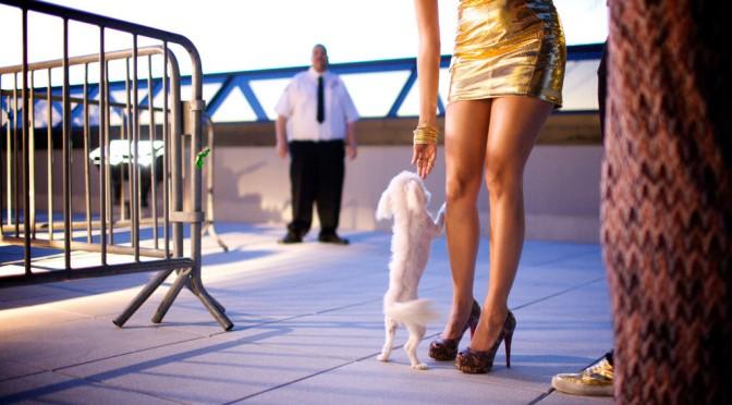 犬の年齢の計算式|最長寿ギネス犬、26歳8か月の大往生