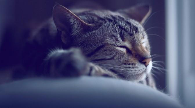 7時間睡眠の人は死亡率が最も低い!?|#ホンマでっかTV