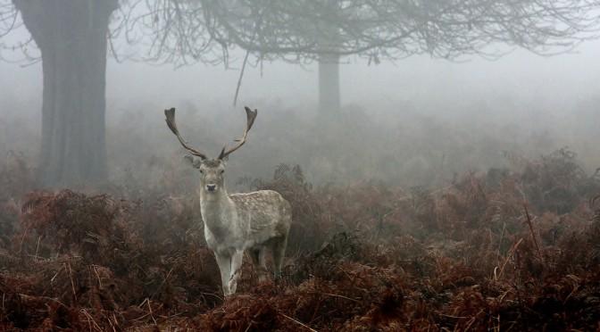 「#精霊の守り人」の原作者 #上橋菜穂子 さんの作品「鹿の王」のきっかけは「更年期(更年期障害)」