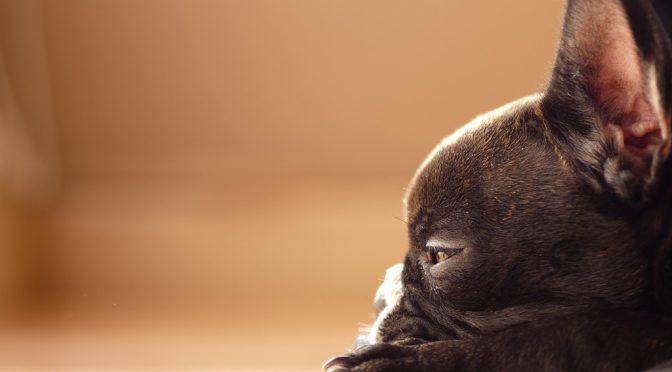 犬が熱中症対策に使う保冷剤を誤飲するとエチレングリコール中毒の危険性がある!?