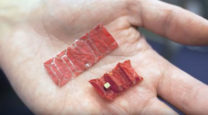 胃の中のボタン電池などを磁力で捕まえる「飲み込めるロボット」を開発 米ではボタン電池を飲み込んでしまう事例が年間3500件発生! MITと東工大ら
