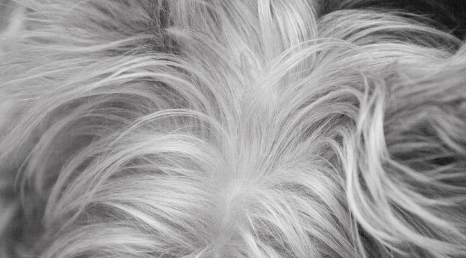 老化によって白髪になる仕組み解明 再生医療応用に期待|東京医科歯科大や金沢大など