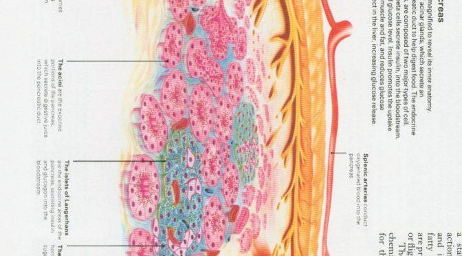 すい臓の病気(慢性膵炎と膵がん)と糖尿病