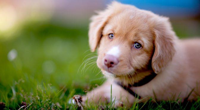 高脂血症の犬が多い?|飼い犬の大規模「メタボ」検査-秋田の医療系ベンチャーが結果公表