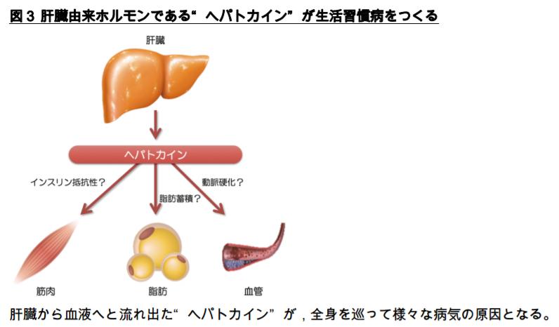 肝臓由来ホルモンであるヘパトカインが生活習慣病を作る