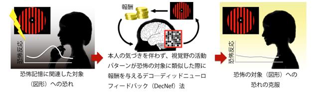つらい経験を思いださせることなく、無意識のうちに恐怖記憶を消去できるニューロフィードバック技術を開発|NICT、ATRら
