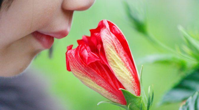 片鼻詰まると脳も対応=におい知覚領域、すぐに切り替え|東京大大学院