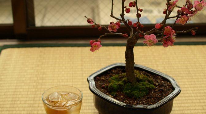 梅干しを1日1個以上食べると胃がんと糖尿病の予防ができる!?|和歌山・みなべ町が特許取得