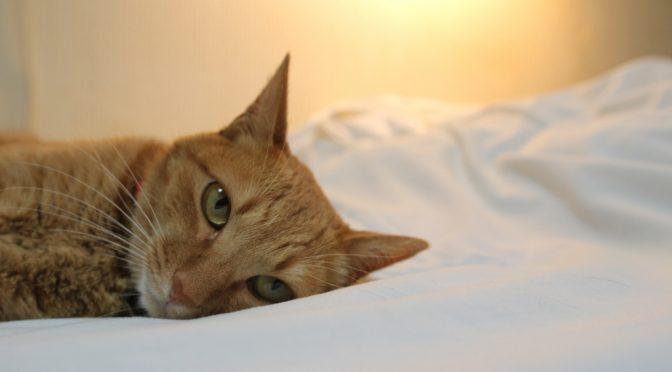ねこヘルスケアIoT「ハチたま」|ネコの見守り・モニタリング・肥満予防・腎不全予防をIoTでの解決する