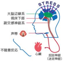 なぜ声帯の変化で心の状態の「見える化」ができるのか?|MIMOSYS(ミモシス:MindMonitoring System)の原理