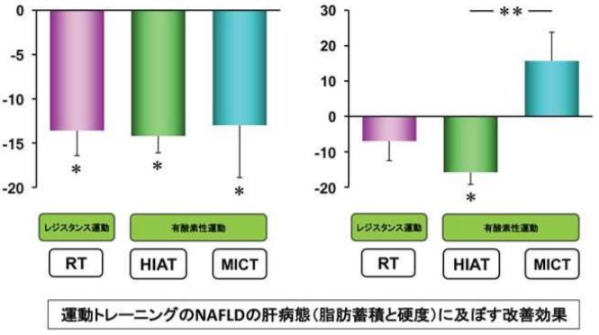 運動(HIAT)によって非アルコール性脂肪肝の脂肪蓄積と肝硬度は改善する!|筑波大【論文・エビデンス】