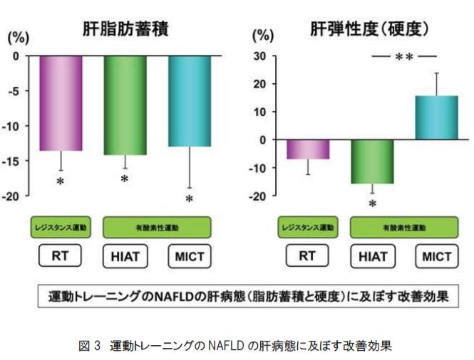 運動トレーニングのNAFLDの肝病態(脂肪蓄積と硬度)に及ぼす改善効果