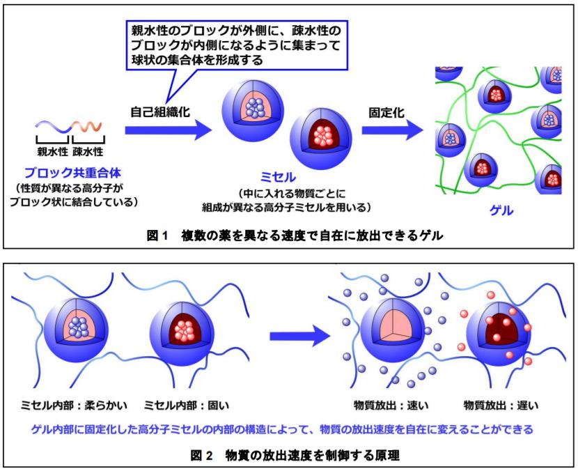 複数の薬を異なる速度で自在に放出できるゲル|物質の放出速度を制御する原理