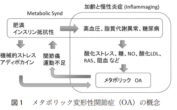 メタボリック変形性関節症の概念