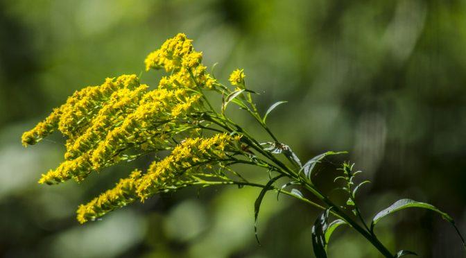 Google、「花粉」「アレルギー」に関するモバイル検索をすると、花粉指数(花粉の飛散状況)を表示|アレルギーに関する検索は毎年4、5、9月に増加|アメリカ人の5人に1人が季節性アレルギー症状で苦しんでいる