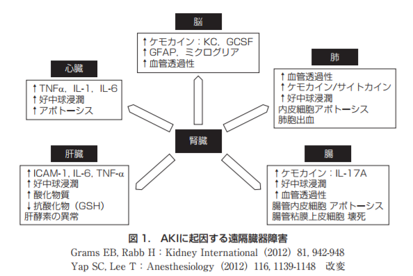 急性腎障害(AKI:acute kidney injury)に起因する遠隔臓器障害