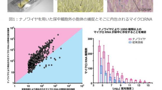 尿中マイクロRNAから「がん(肺がん、膵臓がん、肝臓がん、膀胱がん、前立腺がん)」を特定|名古屋大学