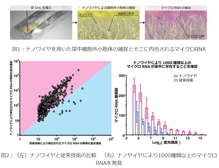 尿中マイクロRNAから「がん(肺、膵臓、肝臓、膀胱、前立腺)」を特定|名古屋大学