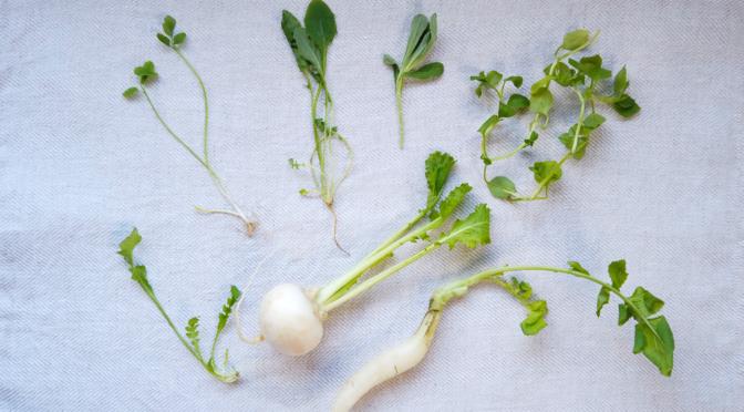 「七草粥」の七草が持つ栄養・健康効果とは?|せり・なずな・ごぎょう・はこべら・ほとけのざ・すずな・すずしろ