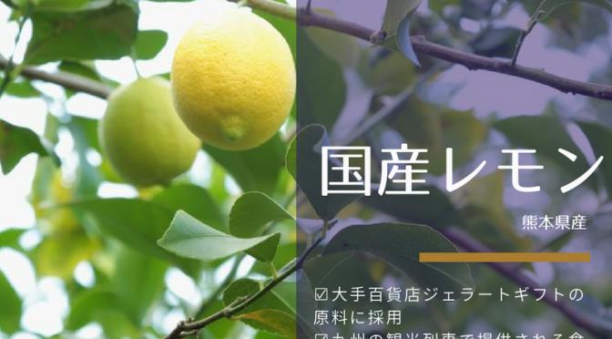 【新発売♪】国産(熊本県産)レモン|はちみつレモンや塩レモン、マーマレードなど皮まで使うお料理にも安心して使えます!