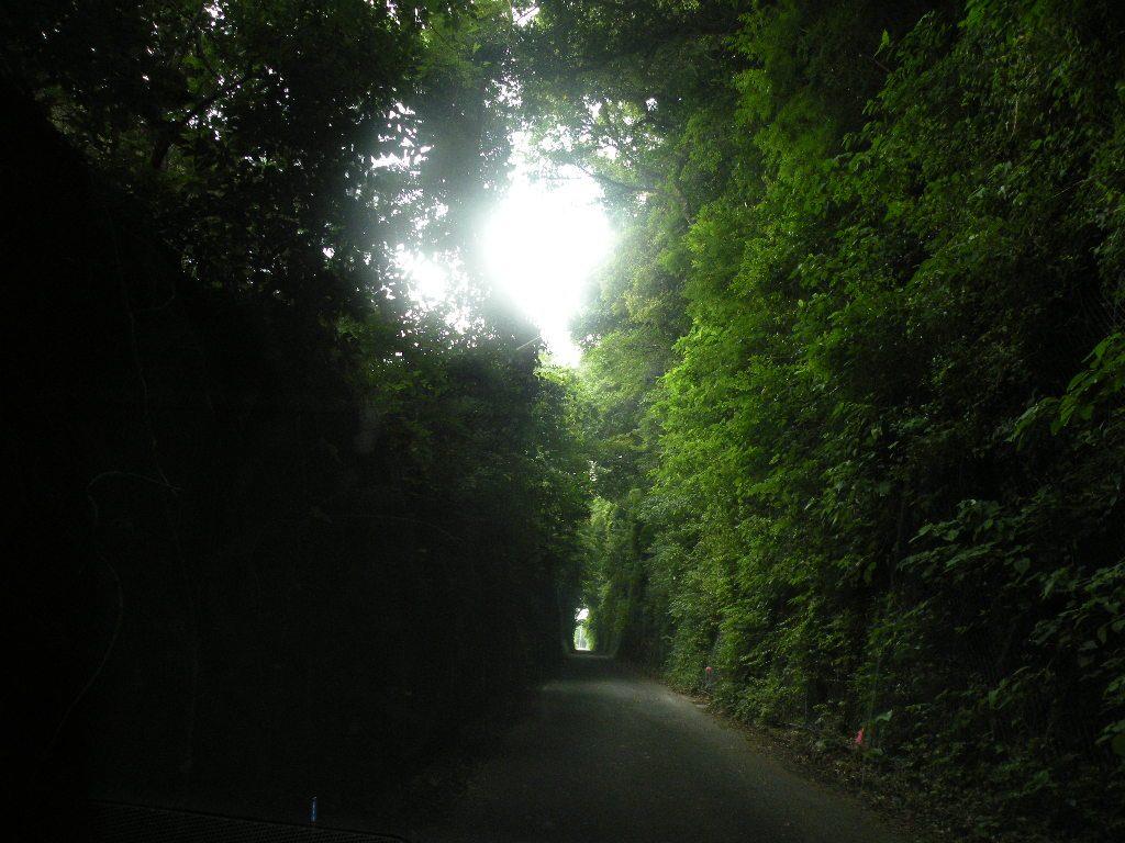 富津から千々石の間の道は幻想的