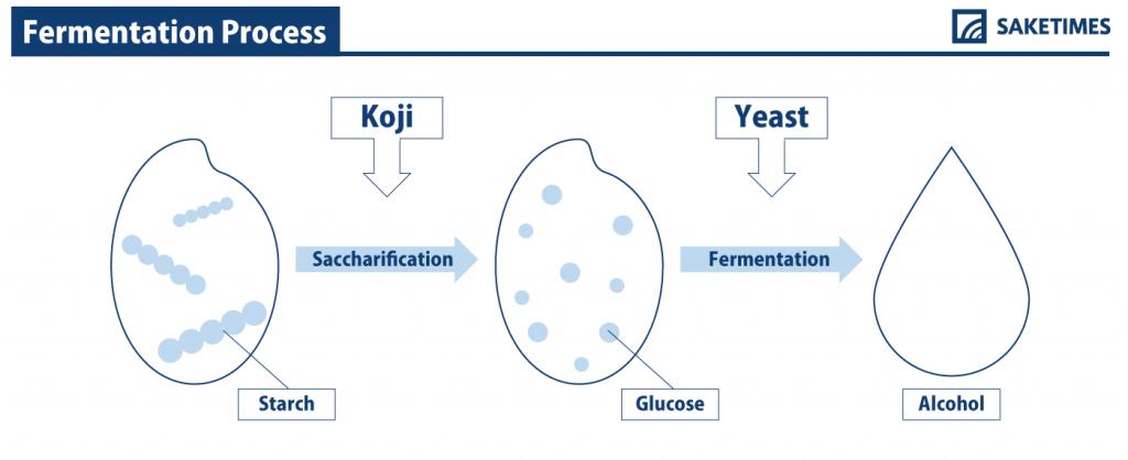 発酵過程(Fermentaiton Prosess)|SAKETIMES