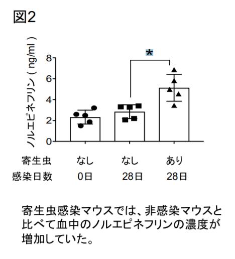 寄生虫マウスでは、血中ノルエピネフリンの濃度が増加