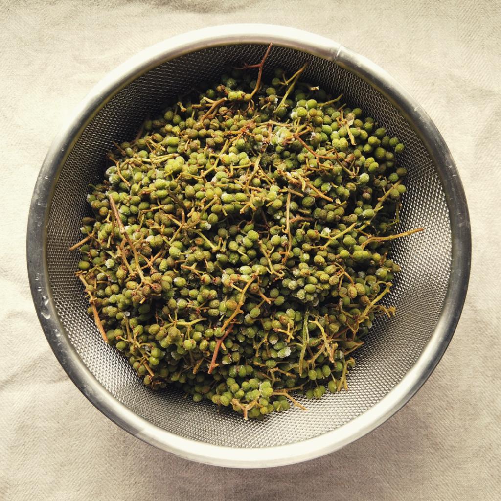 山椒(japanese pepper)