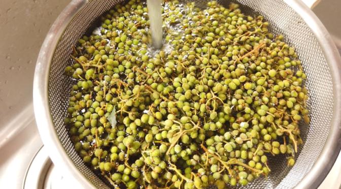 1.山椒の実は枝付きのまま、水で洗ってごみ・汚れを取り除きます。