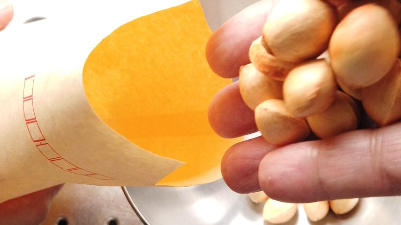1.封筒に銀杏を入れて、電子レンジ(500ワット)で約40-50秒チンします。