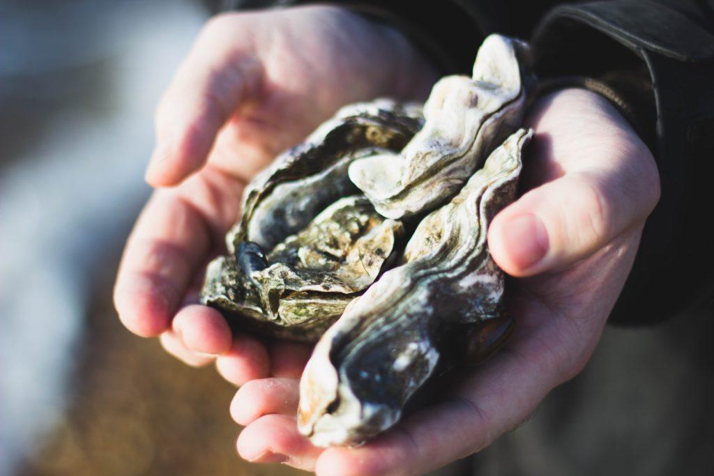 【NHKうまい】豊前海一粒かき|牡蠣にはどんな栄養が含まれてるの?