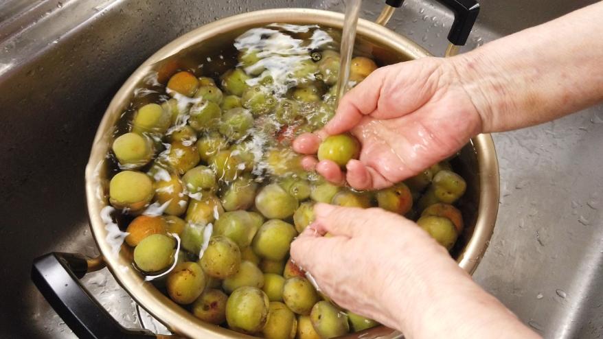 【梅の下ごしらえ】1.梅を流水で水洗いし、汚れを落とします。
