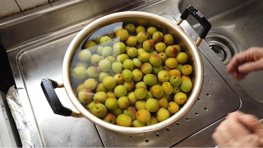 【梅の下ごしらえ】2.梅の熟し方に応じて、水に浸けてアク抜きしましょう。青梅の場合は2~4時間で、黄色く熟した梅には必要ありません。