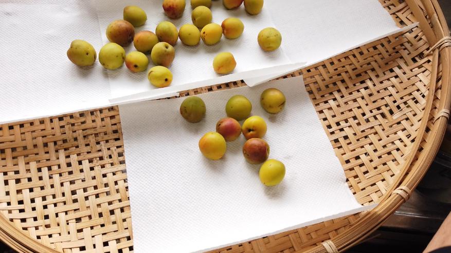 【梅の下ごしらえ】3. 水気を切った梅をザルなどに広げて自然に乾かします。