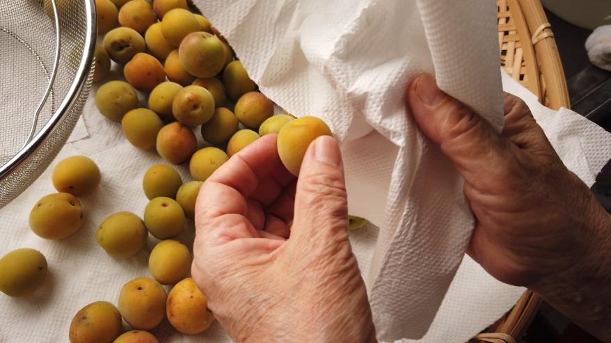 【梅の下ごしらえ】4. キッチンペーパーなどで梅に残った水気を拭き取ります。
